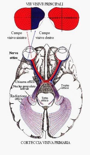 Nervo_ottico