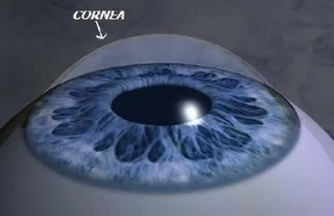 cornea (2)